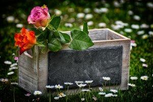 virág ládikában - cikk illusztráció